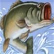 Thi câu cá