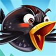 Chim điên 2