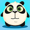 Panda bật cao
