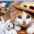 Xếp hình mèo con