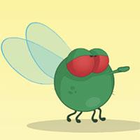 Smoky Fly