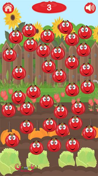 Hãy phá từng quả chua